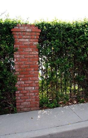 PIDS false alarms - vegetated fence